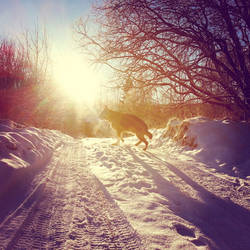 Nero - Winter Sun by Psylocke83