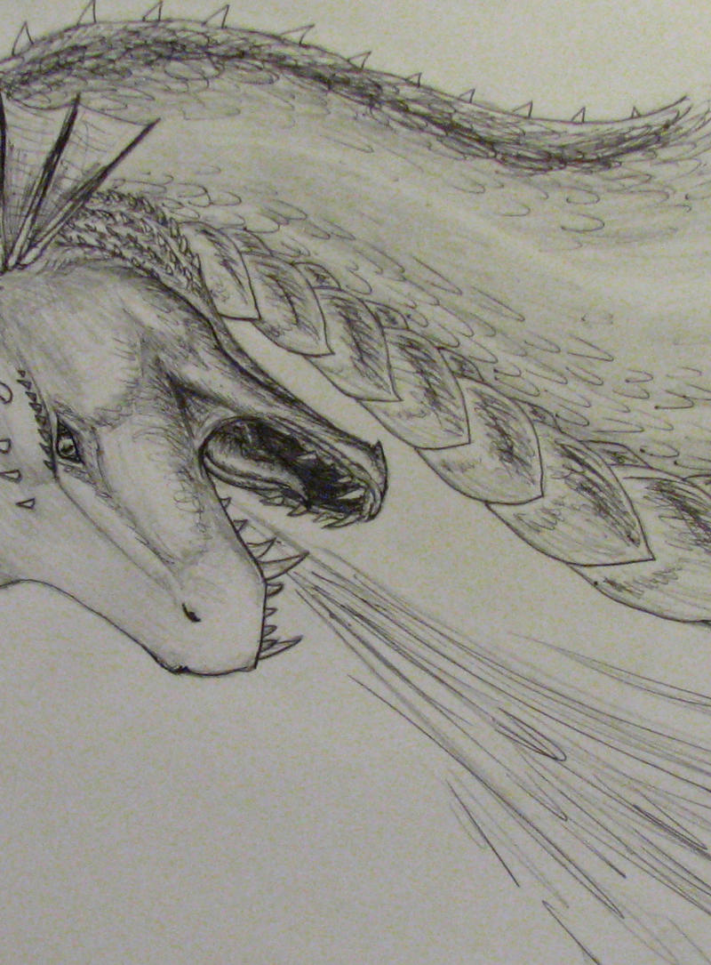 Dragon Sketch By Draconic Fire On DeviantArt