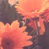 Icon flower by Dementedscream