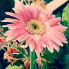 Icon_flower by Dementedscream