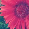 Flower by Dementedscream