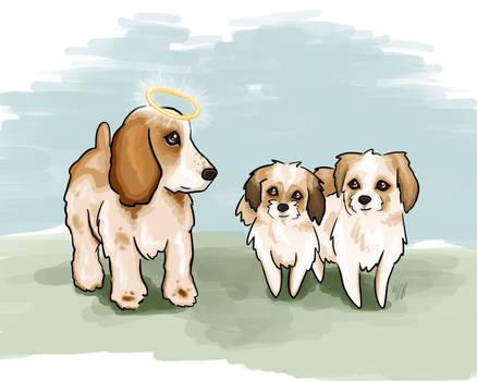 Spaniel and Shih Tzus