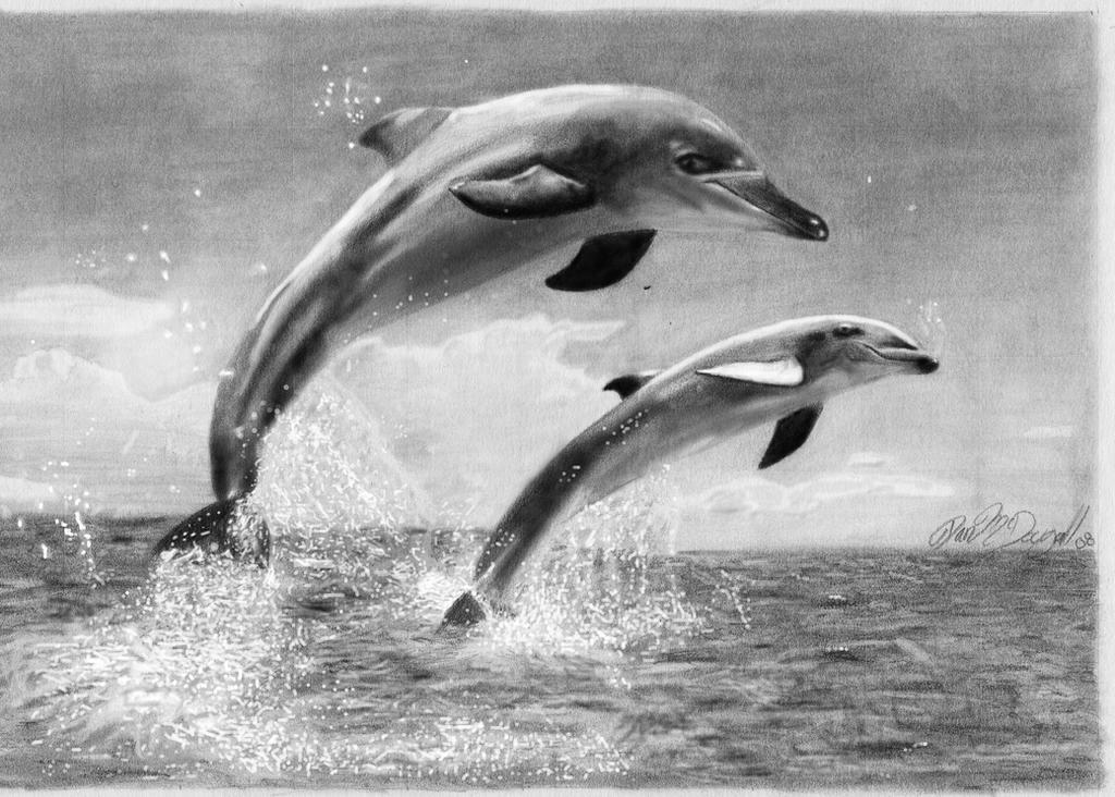 Dolphins by danmcd13 on DeviantArt