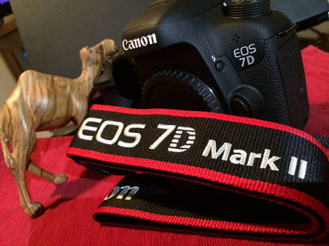 Canon 7D-Day