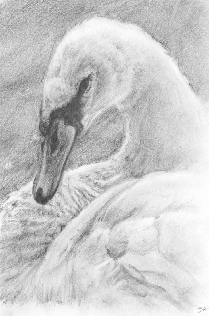 Swan by IzzieCat