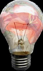 Ampoule Fleurie