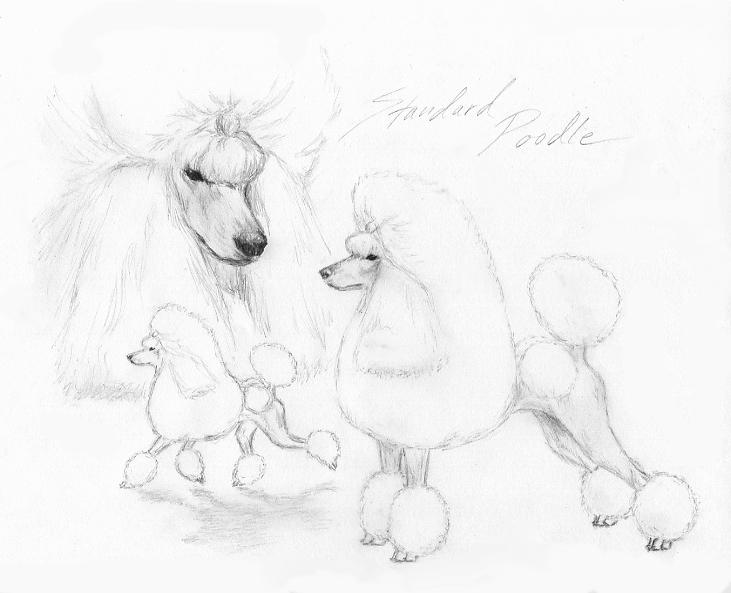 how to draw a realistic poodle
