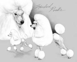Standard Poodle by Embers
