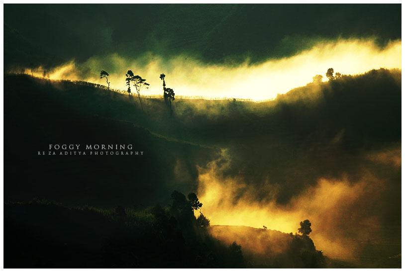 Foggy Morning by rezaaditya7