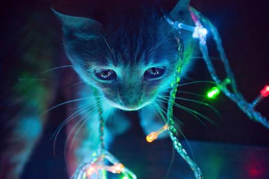 +KittyBokeh