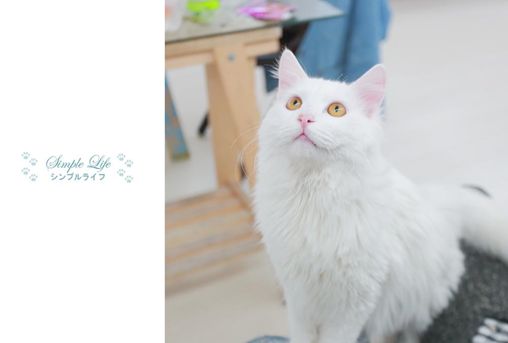 cat-0308-6 by bai917