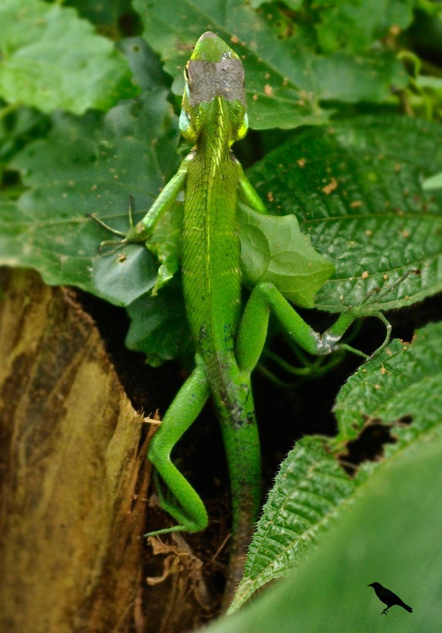 Chameleon Changing Color Video