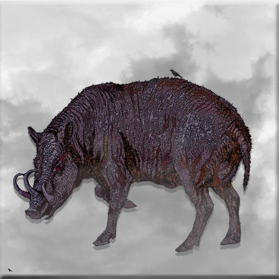 Wild Boar Sketch Wild boar by jennystokesWild Boar Sketch