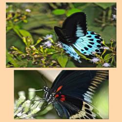 Butterflies. SL by jennystokes