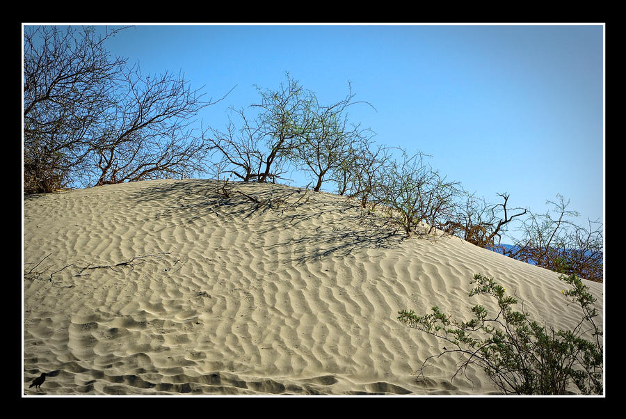 Sand Dunes. Death Valley. USA by jennystokes