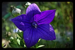 Purple delight by jennystokes