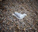Seagulls 2 by jennystokes