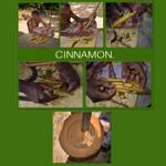 sl14-Cinnamon by jennystokes