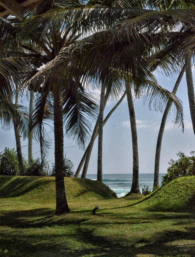 Oh! Sri Lanka by jennystokes