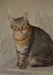 Portrait of Fizz