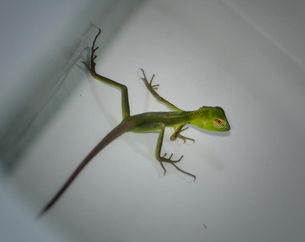 Lizard in our Basin by jennystokes