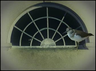 My life as a bird.