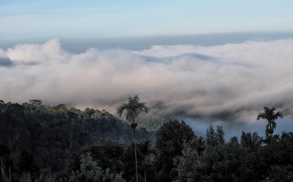 Hill Country. Sri Lanka 1 by jennystokes