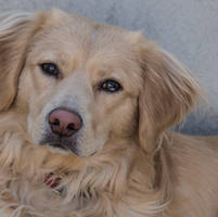 My friends dog...Marcel by jennystokes