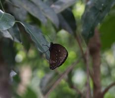 Sweet butterfly. SL