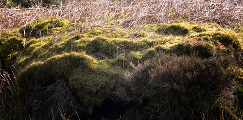 Trough of Bowland. Lancashire. England by jennystokes