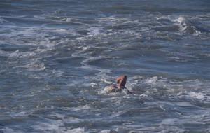 December  swimmer.