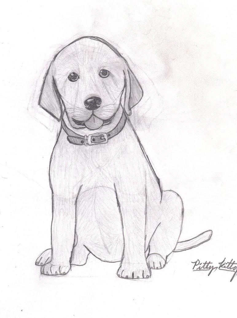 Hi I Am Black Lab Puppy Do You
