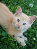Pretty Pretty Kitty by kshelton2011