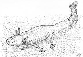 Axolotl by batworker
