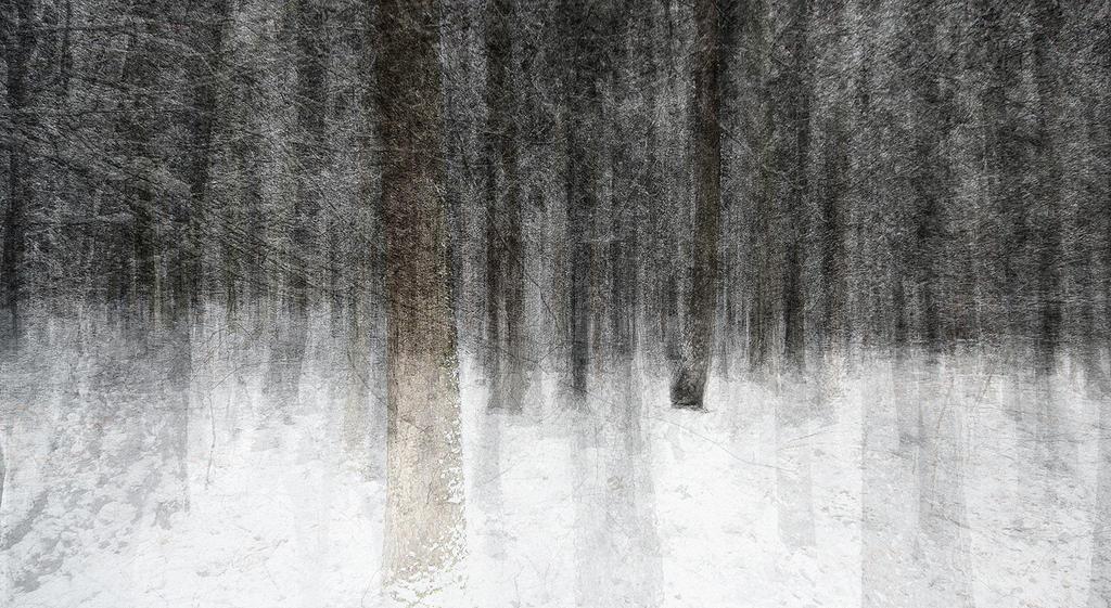 Winter by zeischold