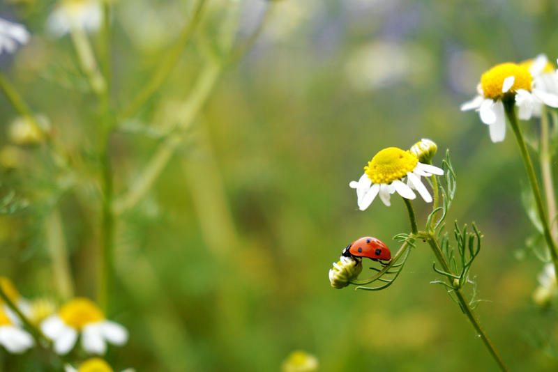 Ladybird by Vilyane