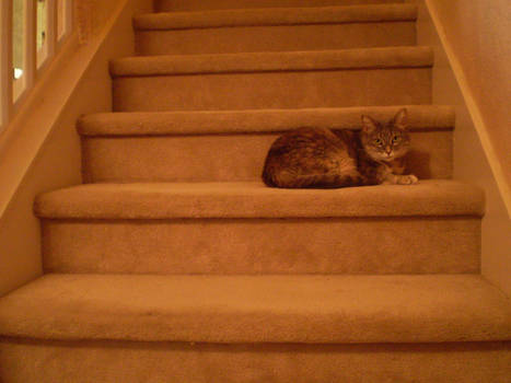 Watch out for the Kitty Step