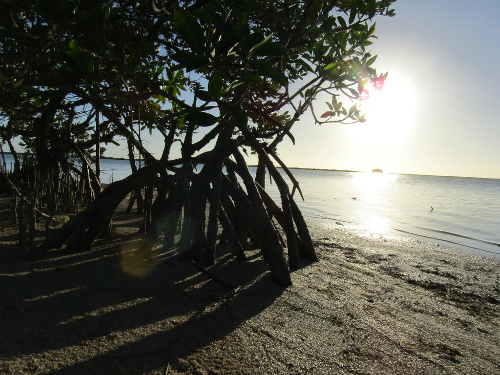 Mangrove Shadows by DoodleArt10