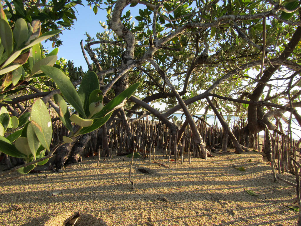 Into the Mangroves by DoodleArt10