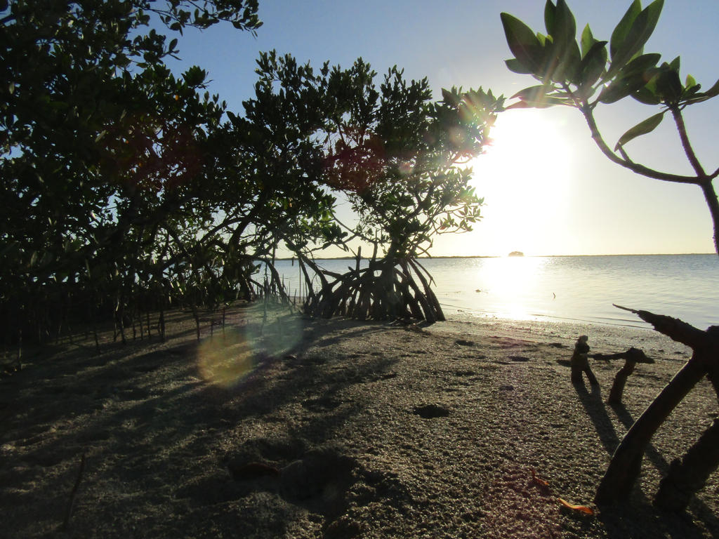Sunny Mangroves by DoodleArt10