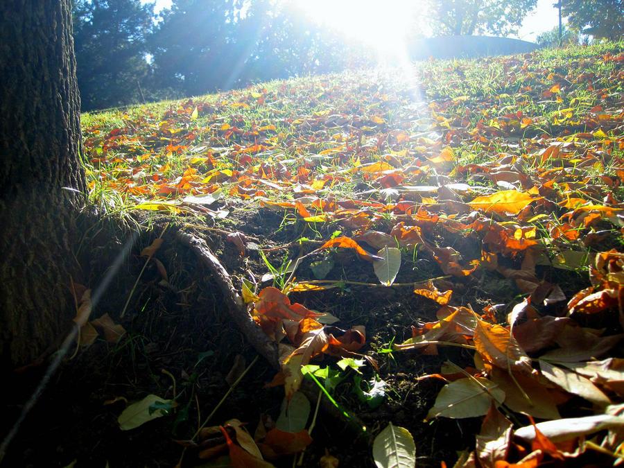 autumn sunshine by bilimum