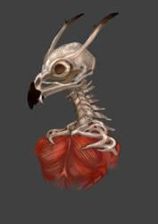 bones by 2943