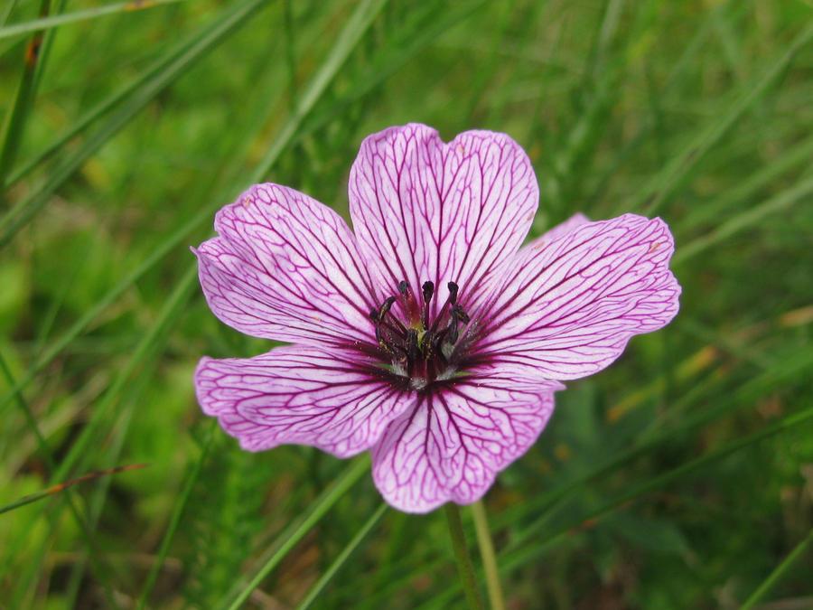 Pretty flower by piikkisika on deviantart mightylinksfo
