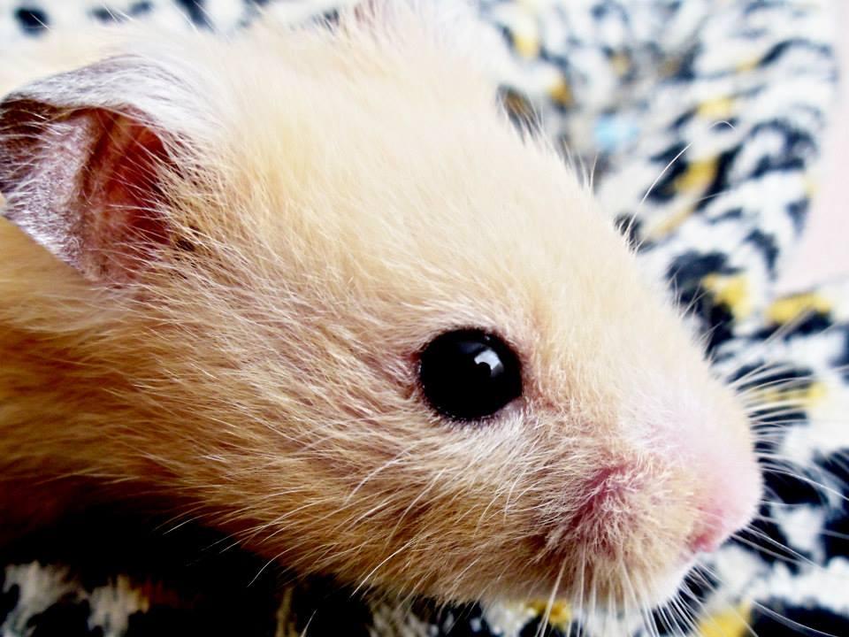 My cute hamster mickey xxx by Warren-Photography on deviantART