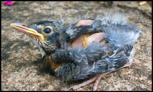 babybird1 by spacingham