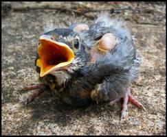 babybird2 by spacingham
