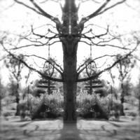tree_for_Sketch by spacingham