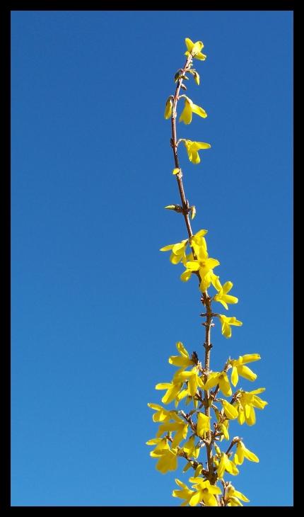 yellow_flower_001 by spacingham