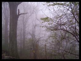 fog_001 by spacingham