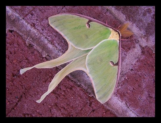 moth_001 by spacingham
